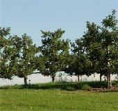 Plant Some Shade tree pick-up is on Saturday