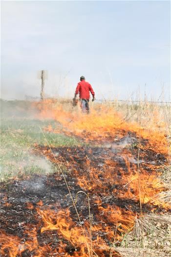 Controlled Burn Heath
