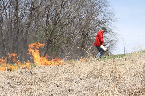 Controlled Burn_Heath
